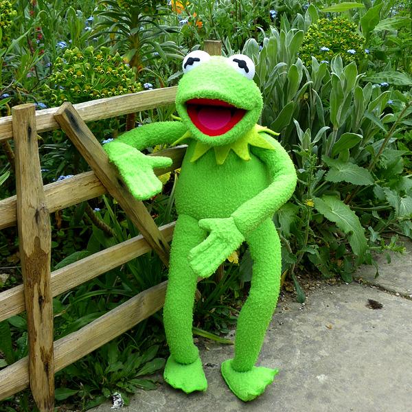 Be a happy Kermit